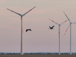 Cranes flying north past wind turbines in the background. Photo by Erell.