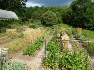 A mid-summer view of the garden