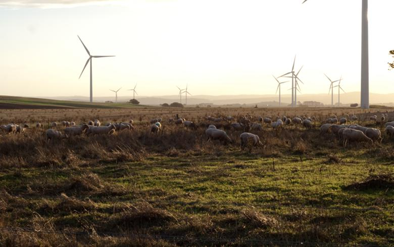 Wind farm in Australia. Author: Steven Caddy. License: Creative Commons, Attribution 2.0 Generic.