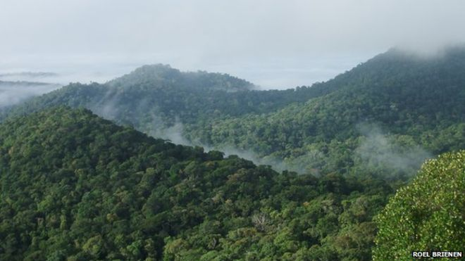 The vast tropical forests of Amazonia account for almost one-fifth of the world's terrestrial vegetation carbon stock.