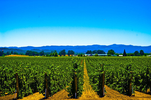 California vineyards are at risk from drought related to climate change.