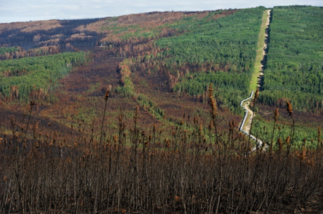 California forest in trouble